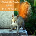 Ideas to Help your 365 Project be a Good One