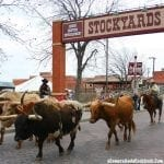 Fun Morning at the Stockyards