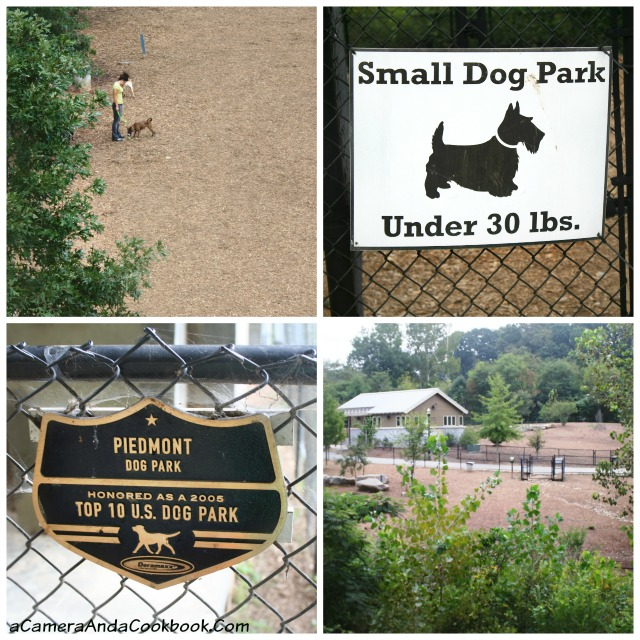 Dog Park at Piedmont Park Atlanta, GA