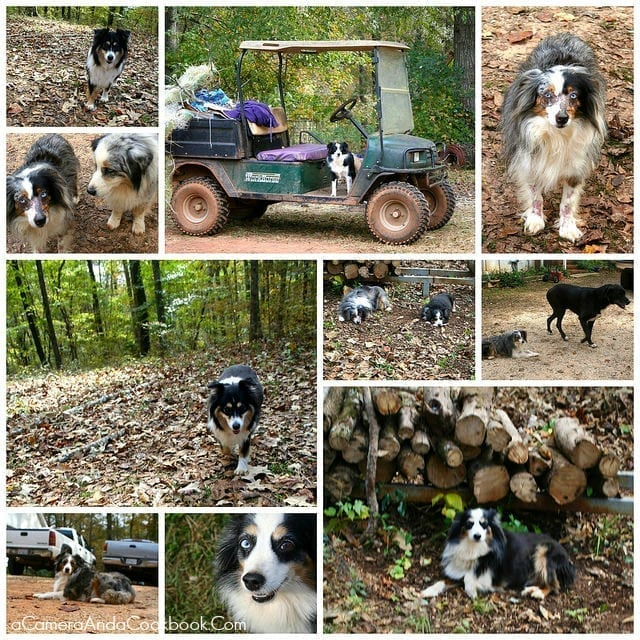 Once a week share with your readers a little more personal information about what's going in your life and with your family in a post called Family Friday.  This edition I share about going out to our friends farm for the afternoon.