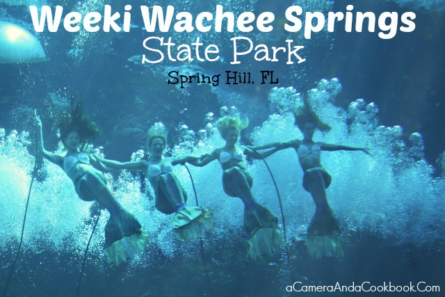 Did you know that Mermaids really do exist?  Weeki Wachee Springs is home to one of the only places around where you'll find real live mermaids!
