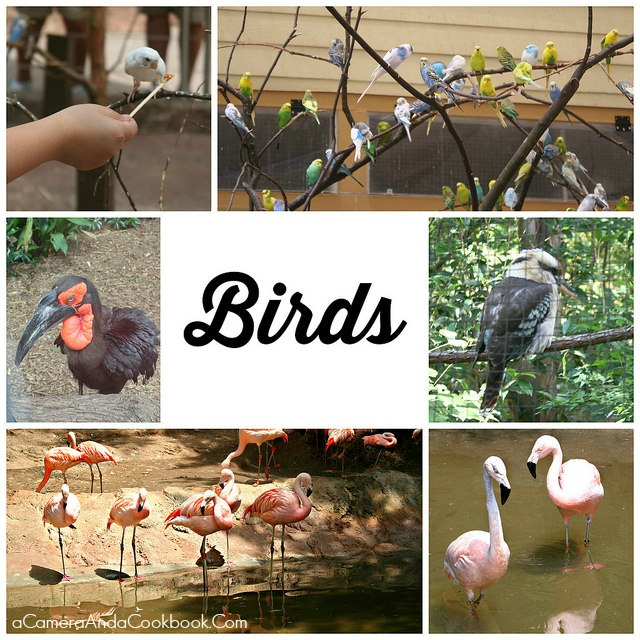 Zoo_Atlanta_Birds