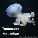 Tennessee Aquarium {Chattanooga, TN}