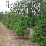 Christmas Tree Shopping 2016
