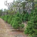 Christmas Tree Shopping 2016