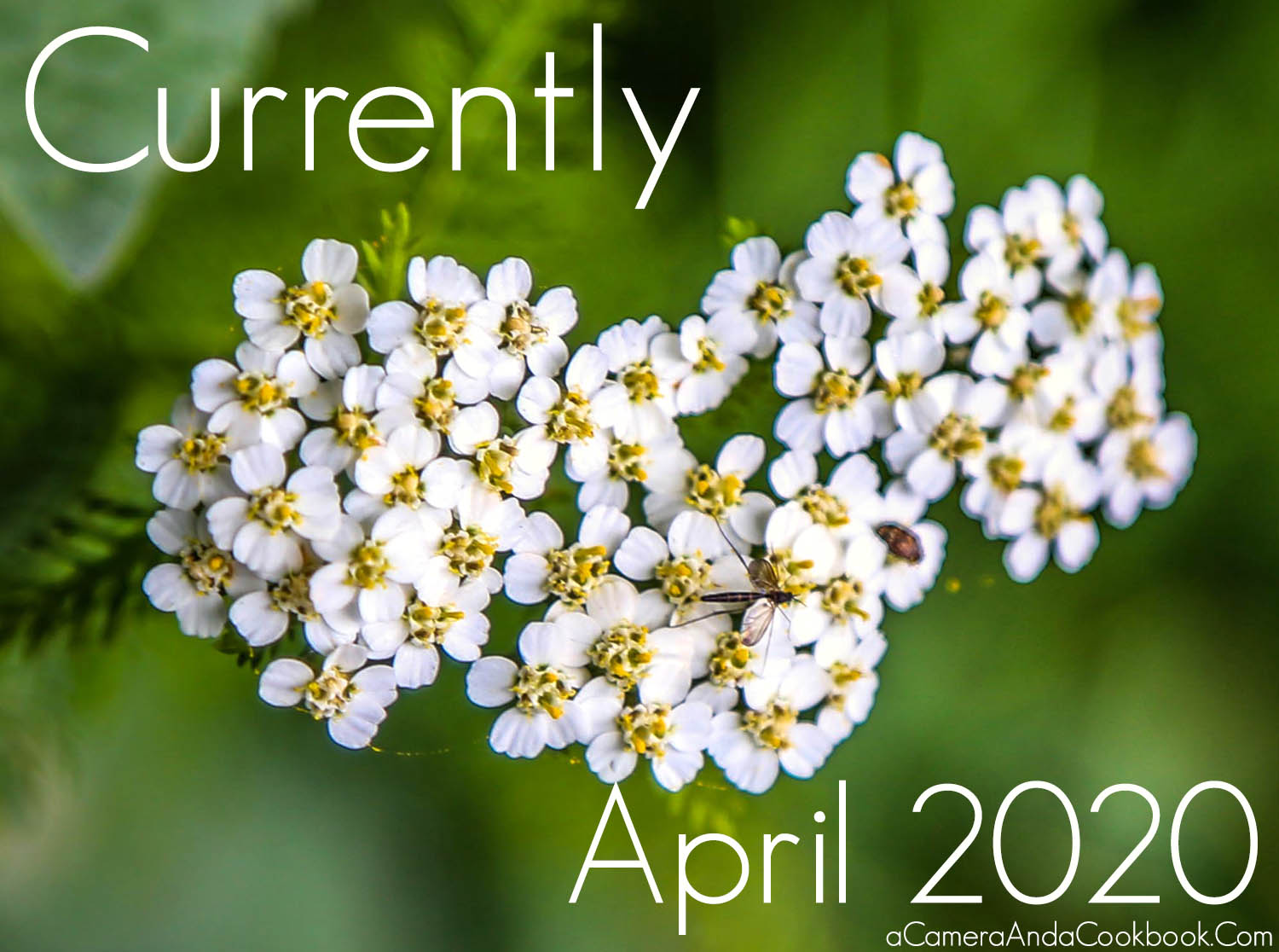 Currently – April 2020