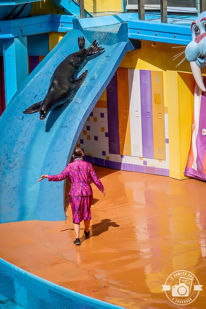 A Day at SeaWorld - Orlando, Florida