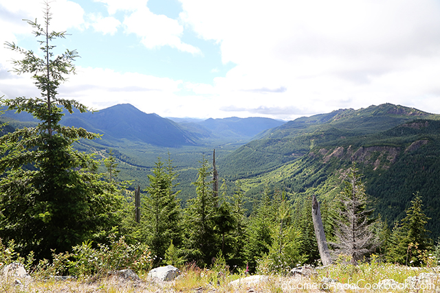 Exploring Mount St. Helens