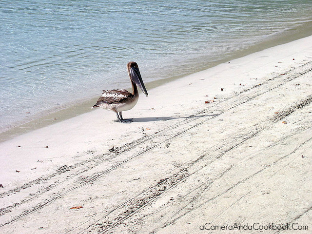 {7 Day Eastern Caribbean} Celebrity Century: Part 1 :: I loved watching this Pelican