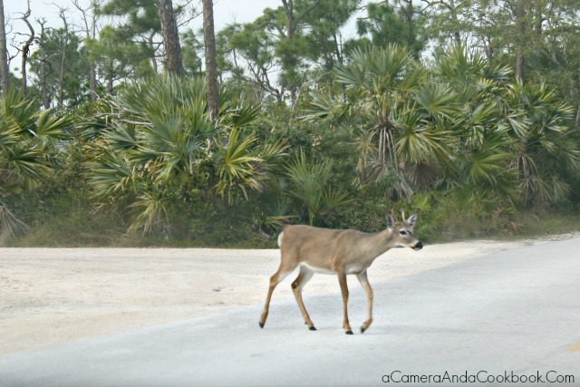 Key Deer National Wildlife Refuge