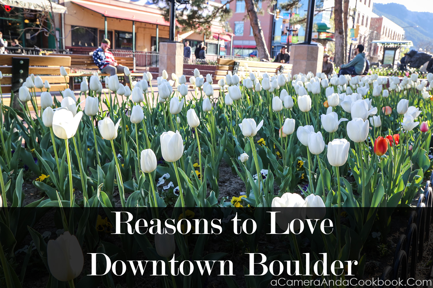 Reasons to Love Downtown Boulder, CO